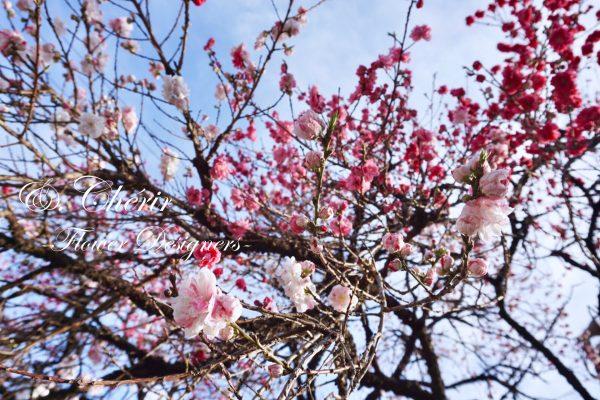 桜も良いけれど…